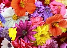 Blumentreff Henkel